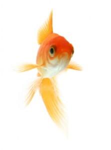 pet-health-fish